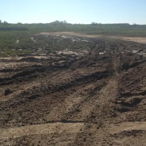 tracks in mud