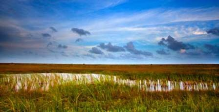 Mad Island Marsh