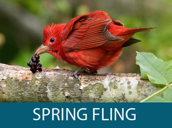 SMITH POINT SPRING FLING