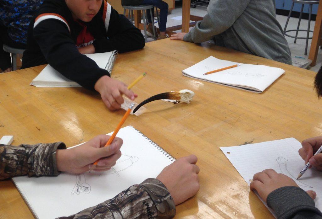 Students studying a bird skull